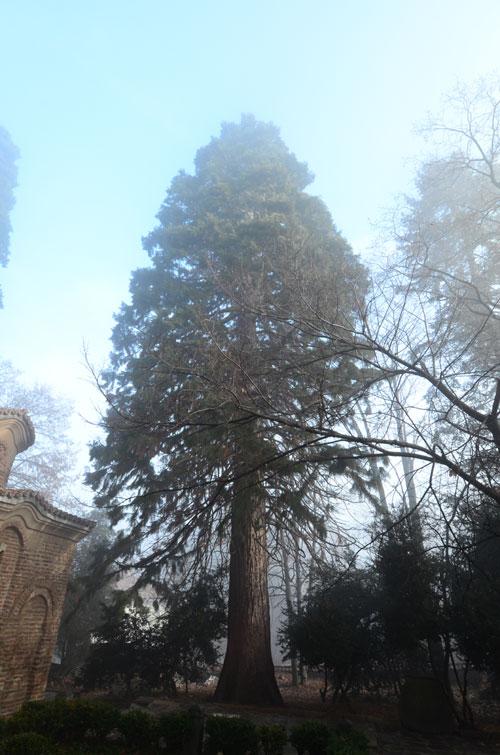 Fantastični bor