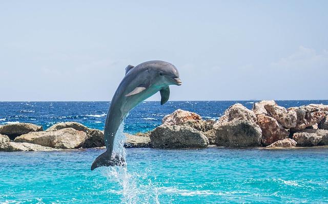 Skok delfina
